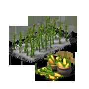 CornProduce.png
