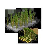 SugarcaneProduce.png