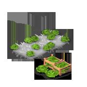 LettuceProduce.png