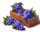 ResourceGrapes.png