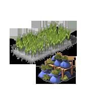 BarleyProduce.png