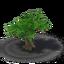 Tree fig 3 crop.png