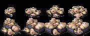 Raw Shells