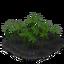 Plant papyrus 3 crop.png