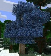 Silverwoodtree.jpg