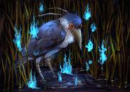 T-c-kua-heron