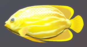 Lucky Golden Fish