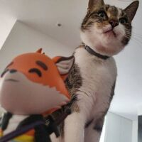Fundy Cat