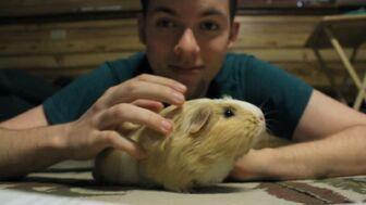 NateTalksToYou Guinea Pig