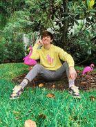 Albert/ Flamingo