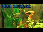 I OWN A KILLER FISH!!