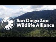 Introducing San Diego Zoo Wildlife Alliance