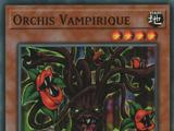 Orchis Vampirique