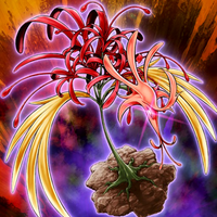 Amaryllis Phénix.png