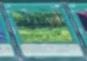 Forest-JP-Anime-AV