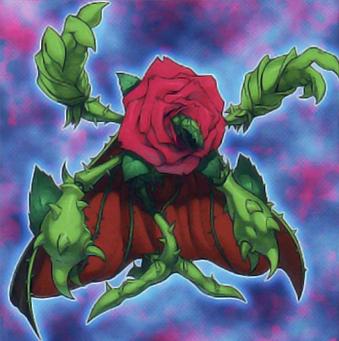 Rosa Rigenerante
