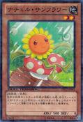 NaturiaSunflower-DTC2-JP-DNPR-DT