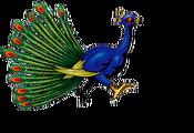 Peacock-DULI-EN-VG-NC