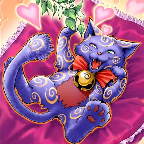Gato del Catnip