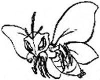 Polilla Orquídea