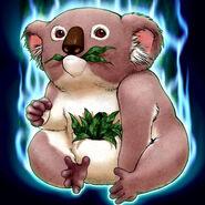 Foto des koala
