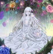 Foto doncella de la rosa del jardín