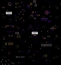 Map1297