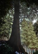 Giant Cedar of Yushima