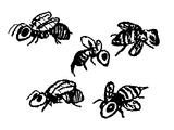 Dämonenbiene