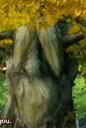 Professor Philospher Tree.png