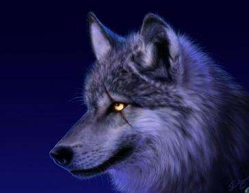 Bardulfwolf.png