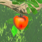 BOTW Encyclopédie Pomme