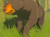 Bear (race)