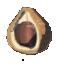 Chickaloo Tree Nut