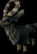 Chèvre TP