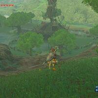 Great Hyrule Forest Zeldapedia Fandom