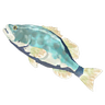 Breath of the Wild Frozen Fish (Bass) Frozen Hearty Bass (Icon)