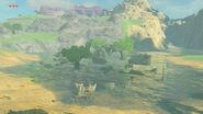 BOTW ruines du temple des sages