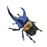 Bladed Rhino Beetle