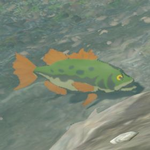 BotW Hyrule Compendium Hyrule Bass.png