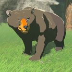 BotW Hyrule Compendium Honeyvore Bear.png