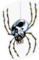 SSBB Skulltula Sticker Icon.png