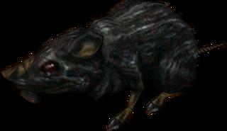 TP Rat Model.png