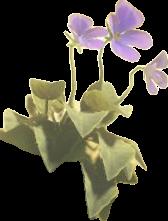 BotW Swift Violet Model.png