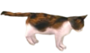 TP Link (Cat) Model.png