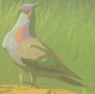 BotW Wood Pigeon Model.png