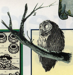 LA Owl Artwork 4.png