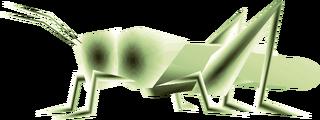 TP Male Grasshopper Render.png
