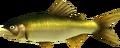 MM3D Sweet Ranchfish Model.png