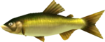 MM3D Sweet Ranchfish Model.png